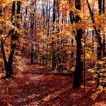 Profiter d'une randonnée pédestre inoubliable sur le Bruce Trail au Canada
