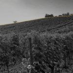 Patriwine assure pour le vieillissement optimal de vos vins
