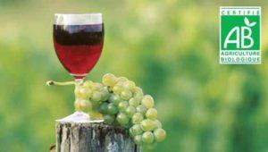 vin-bio-c-est-quoi