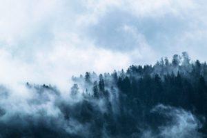 Foret dans le brouillard