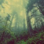 La reforestation massive en Éthiopie