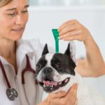 Comment enlever une tique sur un chien ?