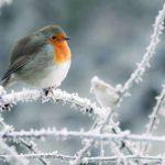 Prendre soin des oiseaux en hiver
