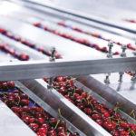 Quelles sont les machines utilisées pour calibrer ces fruits et légumes ?