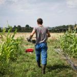 A Génissac, un véritable incubateur d'entreprises néo-agricoles voit le jour